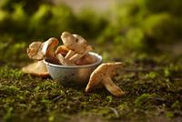 Close-up of Small Metal Bowl of Whole Chanterelle Mushrooms on Dirt and Moss 11030048605  写真素材・ストックフォト・画像・イラスト素材 アマナイメージズ