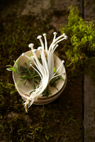 Overhead View of Raw Enoki Mushrooms on Small Plate on a background of Moss, Dirt and Wood 11030048610| 写真素材・ストックフォト・画像・イラスト素材|アマナイメージズ