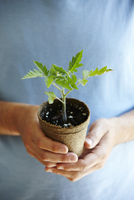 Close-up of Man's Hands Holding a Tomato Seedling in Compostable Pot