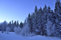 Landscape of Forest in Winter by Moonlight at Night, Bavarian Forest, Bavaria, Germany 11030048663| 写真素材・ストックフォト・画像・イラスト素材|アマナイメージズ
