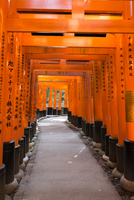 Torii Gates at Fushimi Inari Taisha, Fushimi, Kyoto, Kansai Region, Japan