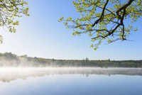 Morning Mist at Lake Rothenbachteich, Grebenhain, Vogelsberg District, Hesse, Germany