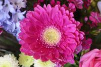 Close-up of a Gerbera × hybrida in a bouquet