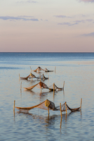 Posts Forming Triangles with Fishing Nets in Calm Water at Sunset, Mon Island, Zealand Region, Denmark