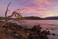 Shore of Lake St Clair, Cradle Mountain-Lake St Clair National Park, UNESCO World Heritage Area, Tasmania, Australia