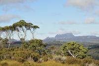 Cradle Mountain, Cradle Mountain-Lake St Clair National Park, UNESCO World Heritage Area, Tasmania, Australia 11030050077| 写真素材・ストックフォト・画像・イラスト素材|アマナイメージズ