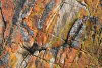 Red Lichen on Rocks, Wineglass Bay, Freycinet National Park, Freycinet Peninsula, Tasmania, Australia