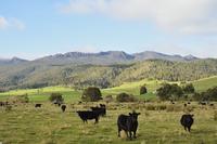 Farmland and Ben Lomond, Upper Blessington, Tasmania, Australia 11030050113| 写真素材・ストックフォト・画像・イラスト素材|アマナイメージズ