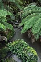 Temperate Rainforest, Tarra-Bulga National Park, Victoria, Australia 11030050151| 写真素材・ストックフォト・画像・イラスト素材|アマナイメージズ