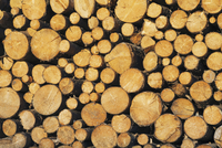 Close-up of Stacked, Log Pile, South Tyrol, Italy