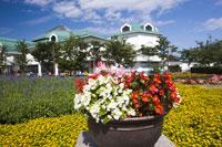 新潟ふるさと村 11031021767| 写真素材・ストックフォト・画像・イラスト素材|アマナイメージズ