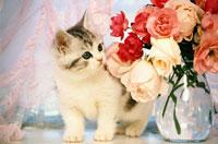 子猫 11031028681| 写真素材・ストックフォト・画像・イラスト素材|アマナイメージズ