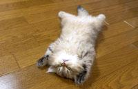 熟睡する子猫