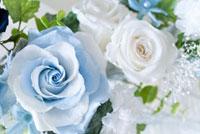 青いバラ 11031047636| 写真素材・ストックフォト・画像・イラスト素材|アマナイメージズ