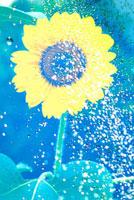 水滴がかかる向日葵