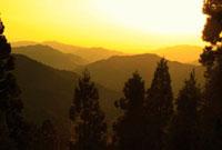 高野山の山並みと高野杉