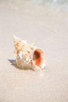 海辺にある巻貝