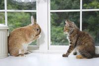 見つめ合う子猫とウサギ