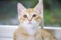 窓辺でお座り子猫