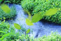 水草と葉っぱ