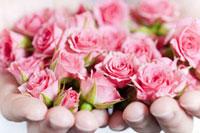両手いっぱいのピンクのバラ