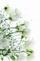 白いバラとかすみ草