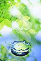 波紋と新緑