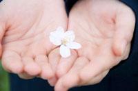 桜の花を手に乗せる女子中学生の手元