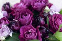 バラとラナンキュラスの紫のブーケ 11031054042| 写真素材・ストックフォト・画像・イラスト素材|アマナイメージズ