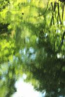 水面に写る新緑