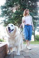 散歩中のゴールデンレトリバーと女性
