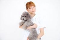 トイプードルを抱っこする動物看護師