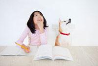 問題の解答を考える柴犬と女の子
