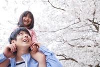 桜の下で父親に肩車をしてもらう女の子