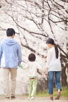 桜の下で歩く家族の後姿