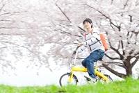 桜並木を自転車に乗って走る笑顔の男性