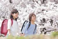 桜の下で手を繋いで歩く小学生男女