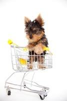 ショッピングカートに乗った子犬