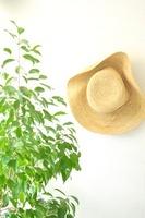 観葉植物と麦わら帽子
