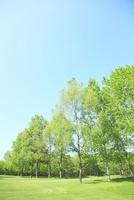 青空と新緑の木々