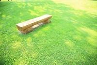 芝の木陰のベンチ