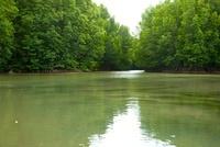 マングローブと川