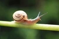 カラーの茎に乗るカタツムリの親子