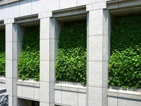 ビルの緑のカーテン