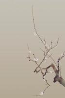 白梅 11031075342| 写真素材・ストックフォト・画像・イラスト素材|アマナイメージズ
