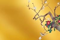 白梅と椿 11031075343| 写真素材・ストックフォト・画像・イラスト素材|アマナイメージズ