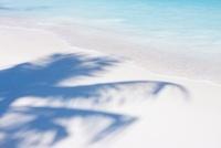 砂浜に椰子の木の影