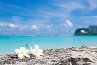 グアムの海とプルメリア