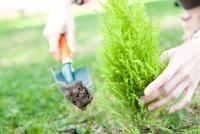 植樹する女性の手元