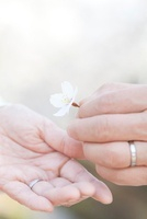 花びらを持つシニアカップルの手元